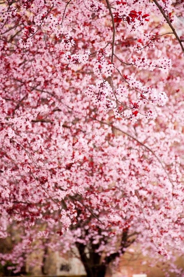 Primavera en Mieres | Juan Luis Nepomuceno