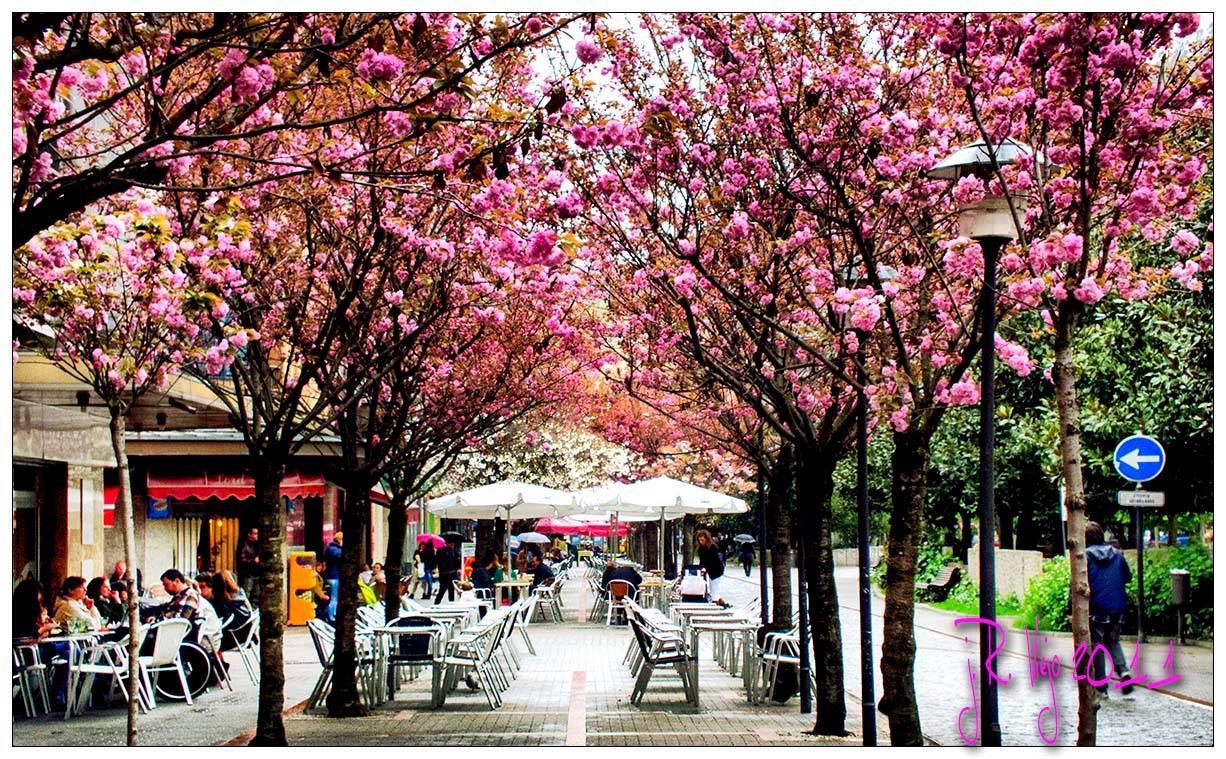 Primavera En La Calle Aller Parque Xovellanos