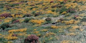 Brezales secos europeos.