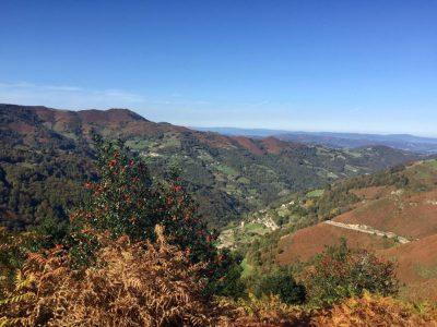 Vista los diferentes tipos de vegetación del espacio protegido de Las Cuencas Mineras.