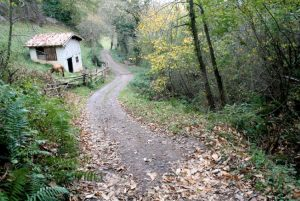 Camino Real de Vistrimir-Riosa
