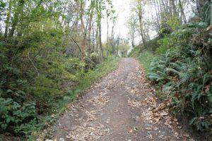 Camino Real de Vistrimir a Riosa