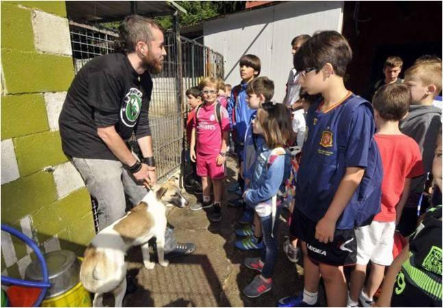 Terapia con animales abandonados