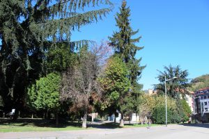 Vegetación en los jardines de Juan XXIII.