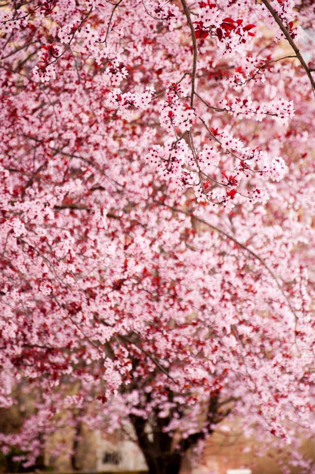 Primavera en Mieres   Juan Luis Nepomuceno