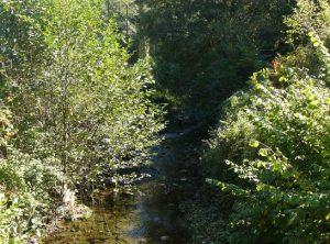 Bosques aluviales de aliso (Alnus glutinosa) y fresnos (Fraxinus excelsior).