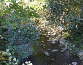 Hábitat de interés especial en el río Turón.
