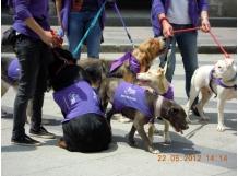Terapia asistida animal