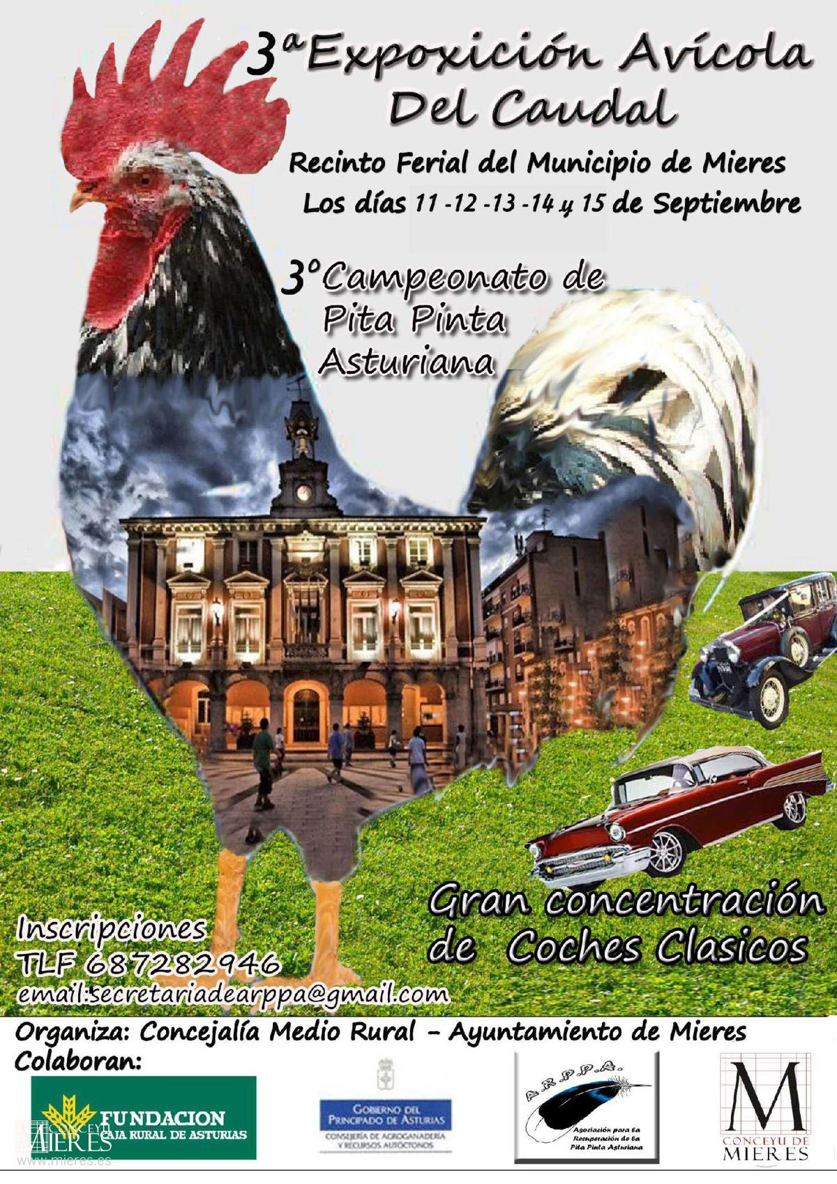 Cartel Exposicion Avicola Del Caudal 2019